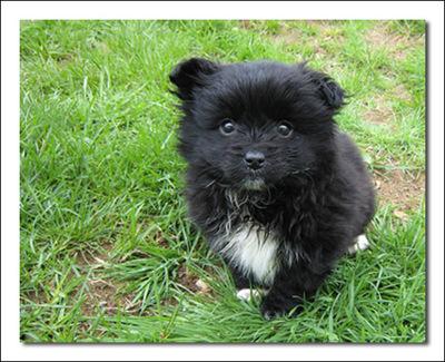 Puppy1sm